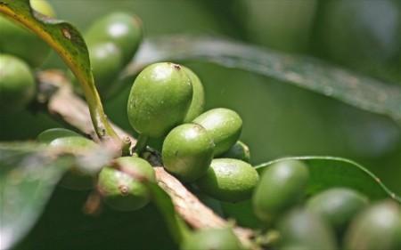 Свойства зеленого кофе для похудения