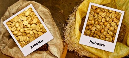arabica_robusta_vidy-kofe