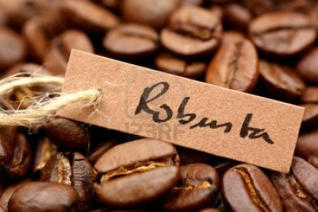 coffee-robusta